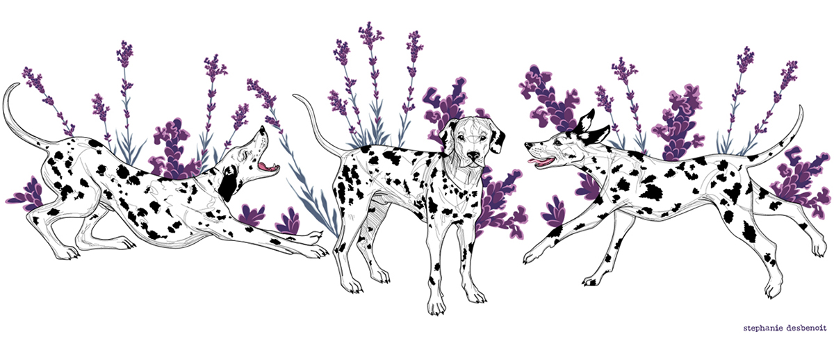 illustration Dalmatiens Lavande Stephanie Desbenoit